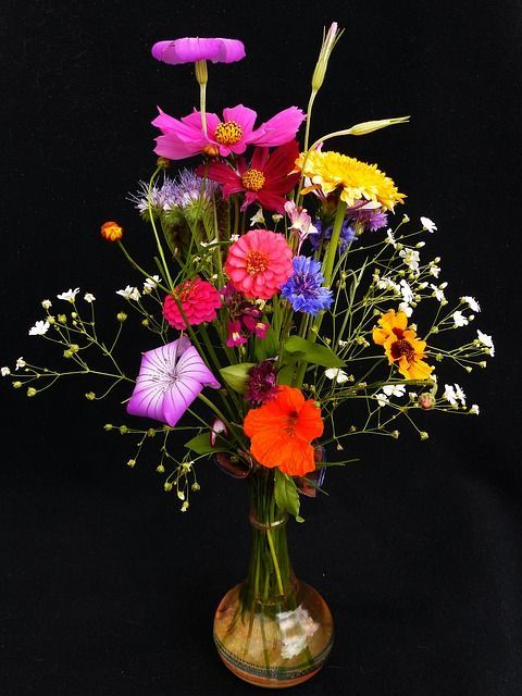wildflowers-1540643_640.jpg