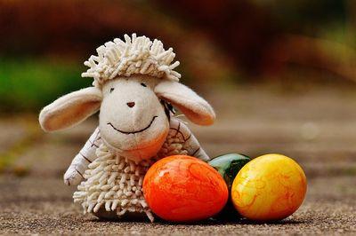 sheep-1272810_640.jpg